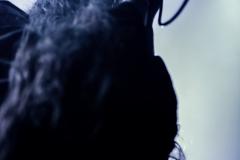Inferno - Le Grillen